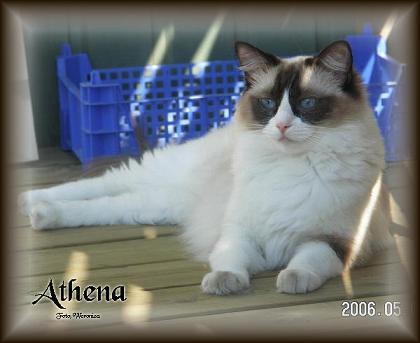 Athena honor