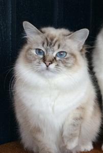 IC Prinsess Adeliz av Ontario*N  SBI b  (Mimmi) 1år 4mån
