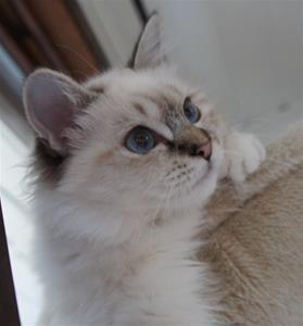 Prinsess Adeliz av Ontario*N  5,5mån