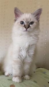 Prinsess Adeliz av Ontario*N  (Mimmi)