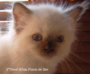 Nord Silvas Fiesta de San b  hane 8v