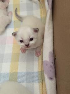 S*Ziblora's Romeo n21 född 8/9-19 2,5v gammal
