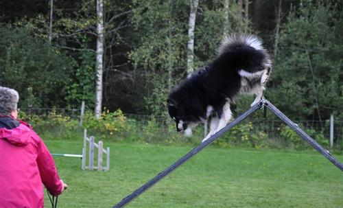 Ajax agility sept 1