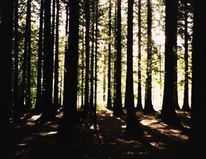 En tidig morgon när solljuset silar sig in mellan träden.