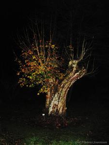 Höstträd i Sundsby