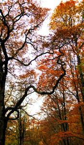 Höstens kronor