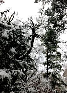 vinterskog 6