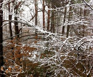 Vinterskog 1