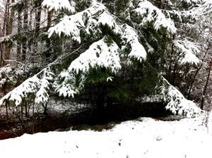 Vinterskog 5