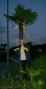 Frisläppta bananer