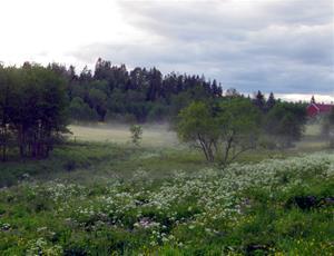 Svensksommaräng
