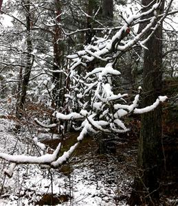 vinterskog 4