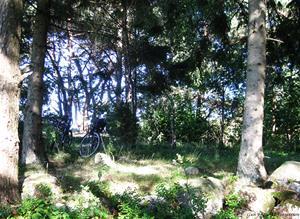 Almön cyklar i skogen