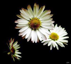 Blomsterskönhet 5
