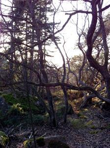 Vild skog