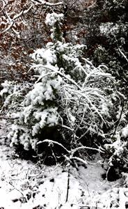 vinterskog 9