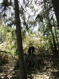 Barn i skogen