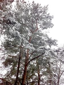 vinterskog 2