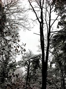 vinterskog 3
