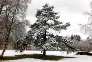 Vinter i Stenungsund
