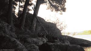 Vid en skogssjö.