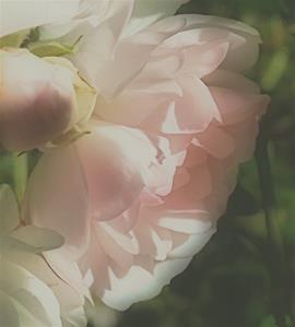 Rosen i oktober