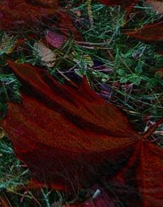 Höstlöv virvlar i vinden