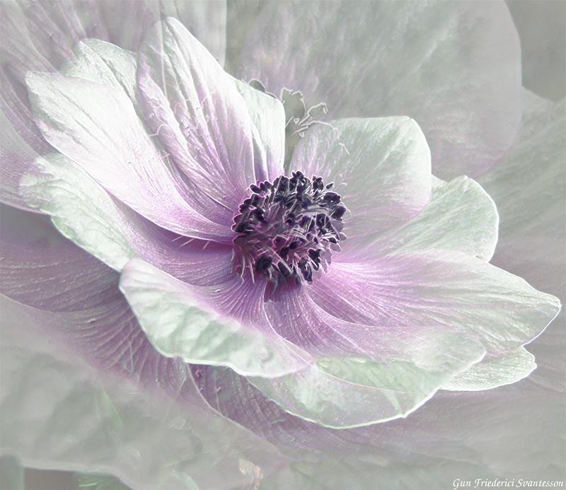 Blomsterskönhet
