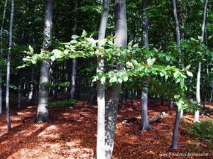 skogsbild gespensterwald höst