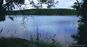 Skogssjön