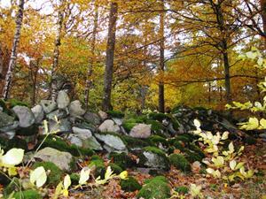 Höstskog i Sundsby, Tjörn.