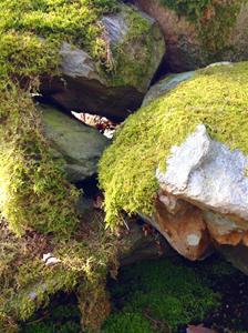 Mossiga stenar