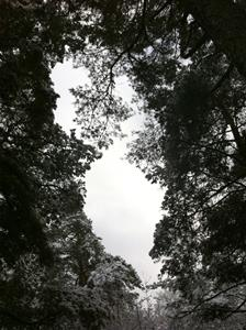 vinterskog 7