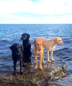 Max, Fröjd,Lejon och Pio