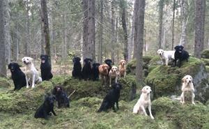 Härliga hundar