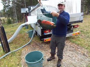 fiskutsättning 011