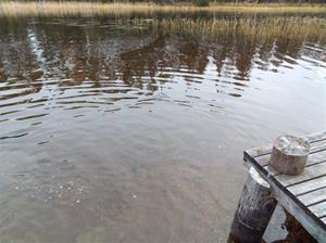 fiskutsättning 023