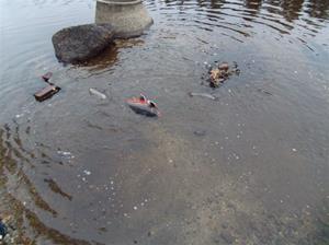 fiskutsättning 002