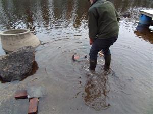 fiskutsättning 013