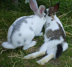 Bamse och Veronica