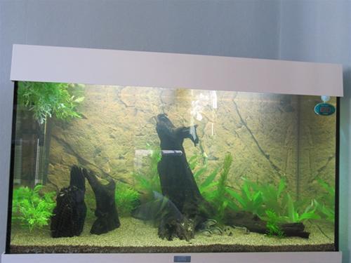 Akvariet med pansarmalar