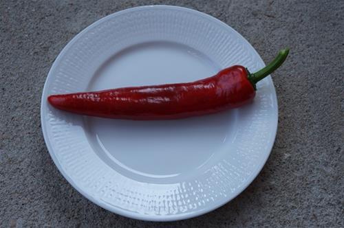Paprika (bullhorn-typ)