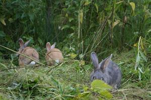 Aurora, Sunny & Hetty (15/7-15)