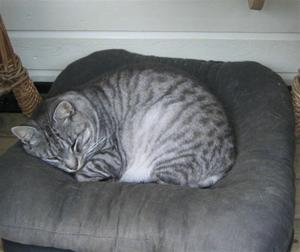 Avslappet katt 11.09.05