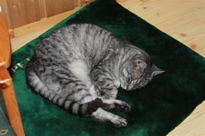 Gammel katt 31.12.10