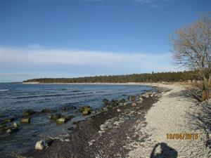 Strandremsa norrut. IMG_1519