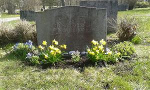 Min far Erik Jakobssons grav, efter plantering av Penséer 2015 04 20.