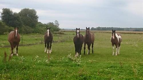 storhästarna