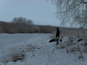 i snöigt landskap