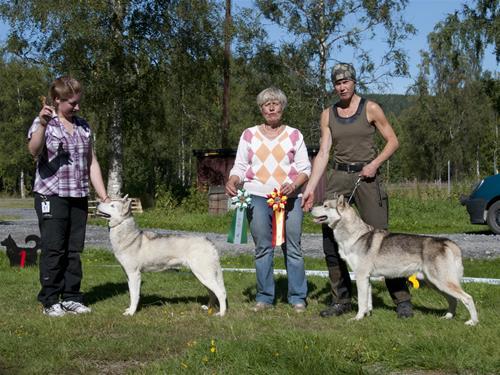 bir bim Sollefteå -13